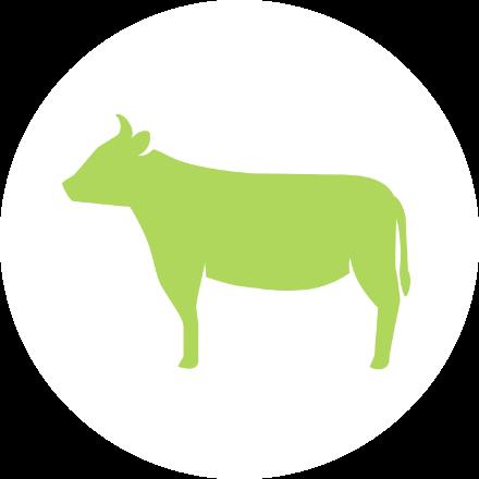 牧畜(和牛)事業